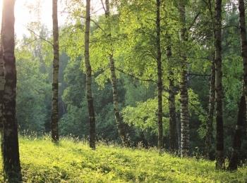 Коттеджный поселок Лесная сказка